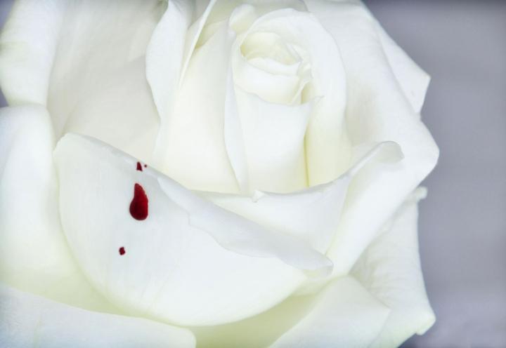 Non c'è rosa senza spina.. di AlfredoNegroni