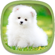 Cute Puppy Wallpapers Apps On Google Play
