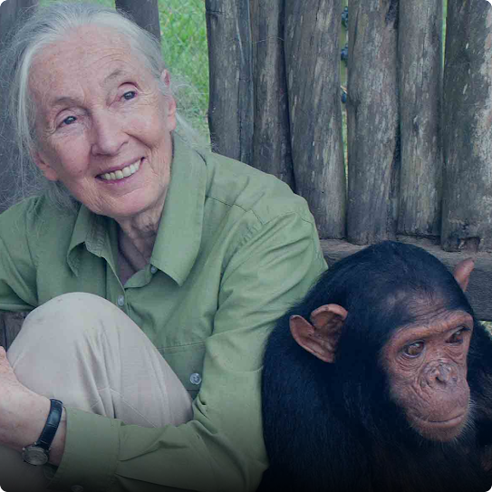 Jane Goodall sits in the forest with an ape next to her.