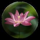 Great Compassion Mantra icon