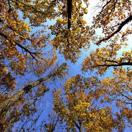 by Agatanghel Alexoaei - Nature Up Close Trees & Bushes