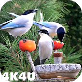4K Garden Birds Video Live Wallpaper
