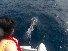 Photo: Dolphins play with The Escape