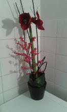 Photo: composition piquée dans de la mousse synthétique avec amaryllis feuillage aspidistra cornus (bois) branchage avec baies rouge  prix environ 25 euros