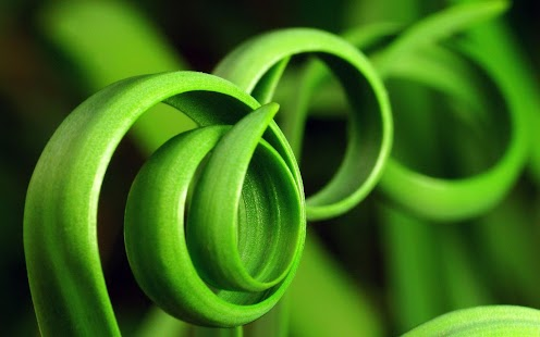 Plants Tile Puzzle - náhled