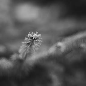 by Igor Mandic - Black & White Flowers & Plants