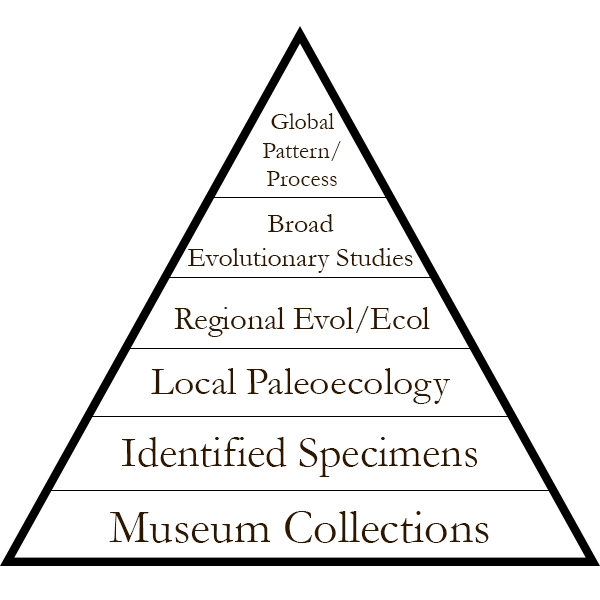 A pyramid showing the hierarchy of paleobiological studies.