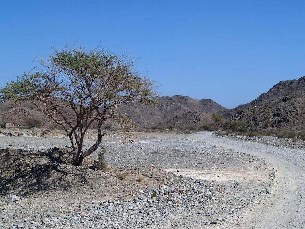 Wadi in UAE