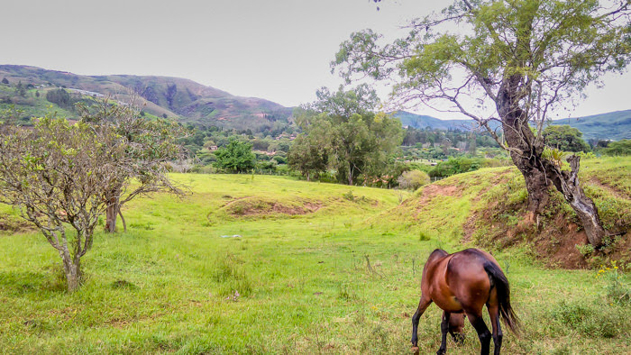 a horse grazing in the countryside of Bolivia