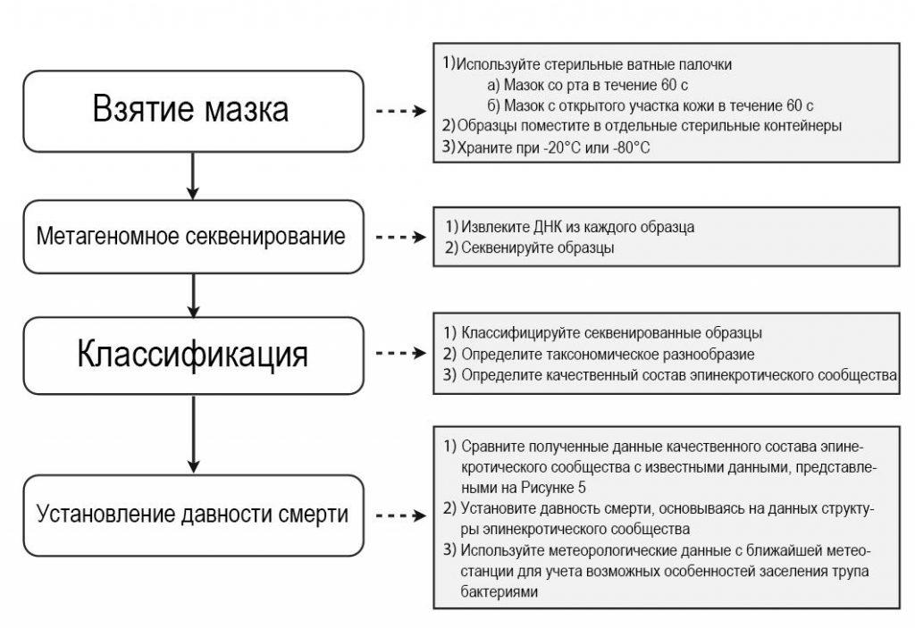 Рисунок 6 – Алгоритм действий утилизации бактериальных сообществ для определения давности смерти