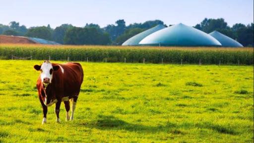 Renewable gas production