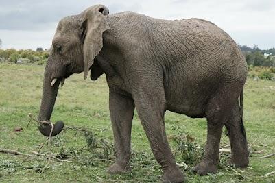 Im Knysna Elephant Park