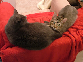 Photo: Another enforced cuddling scene. It didn't last.