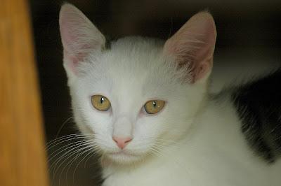 Maya, onze htk-kat