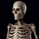 Human Skeleton Reference Guide icon