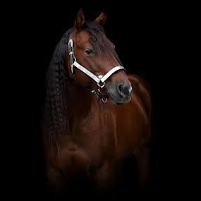 horse by Alessandra Cassola - Animals Horses ( #horse )