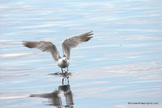 Photo: Georgy's Photo: a gull takes off over the lake