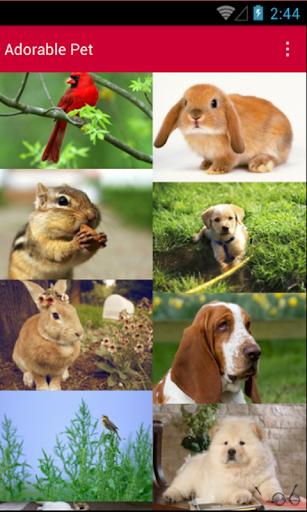Adorable Pet Wallpaper