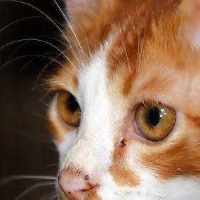 olat by Azman Jaeh - Animals - Cats Kittens