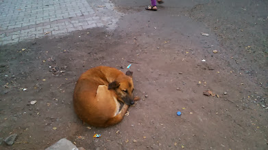 Photo: A dog sleeping peacefully in an afternoon in Viman Nagar. Hey buddy!  24th February updated -http://jp.asksiddhi.in/daily_detail.php?id=464