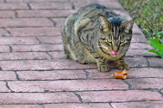Photo: FERAL FELINE FEASTS ON FOUND FRANK (Sorry, couldn't resist ;)
