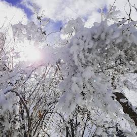 by Samantha Petersen - Nature Up Close Trees & Bushes (  )