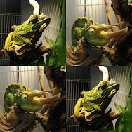 爬蟲熱 Reptile Hot