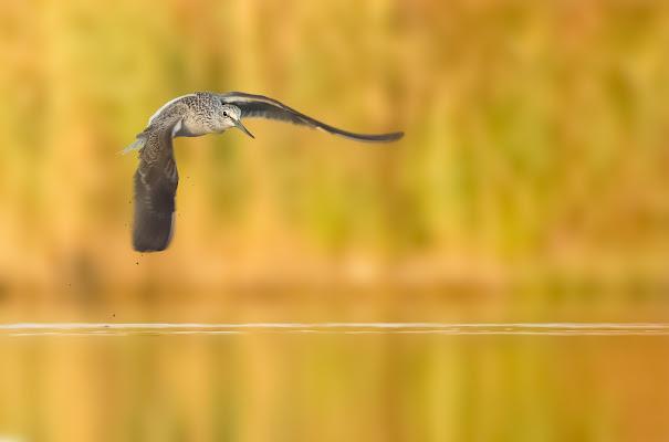 Pantana in volo di Andrea Casolin