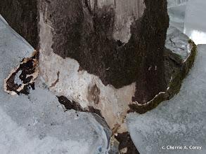 Photo: Ice scour