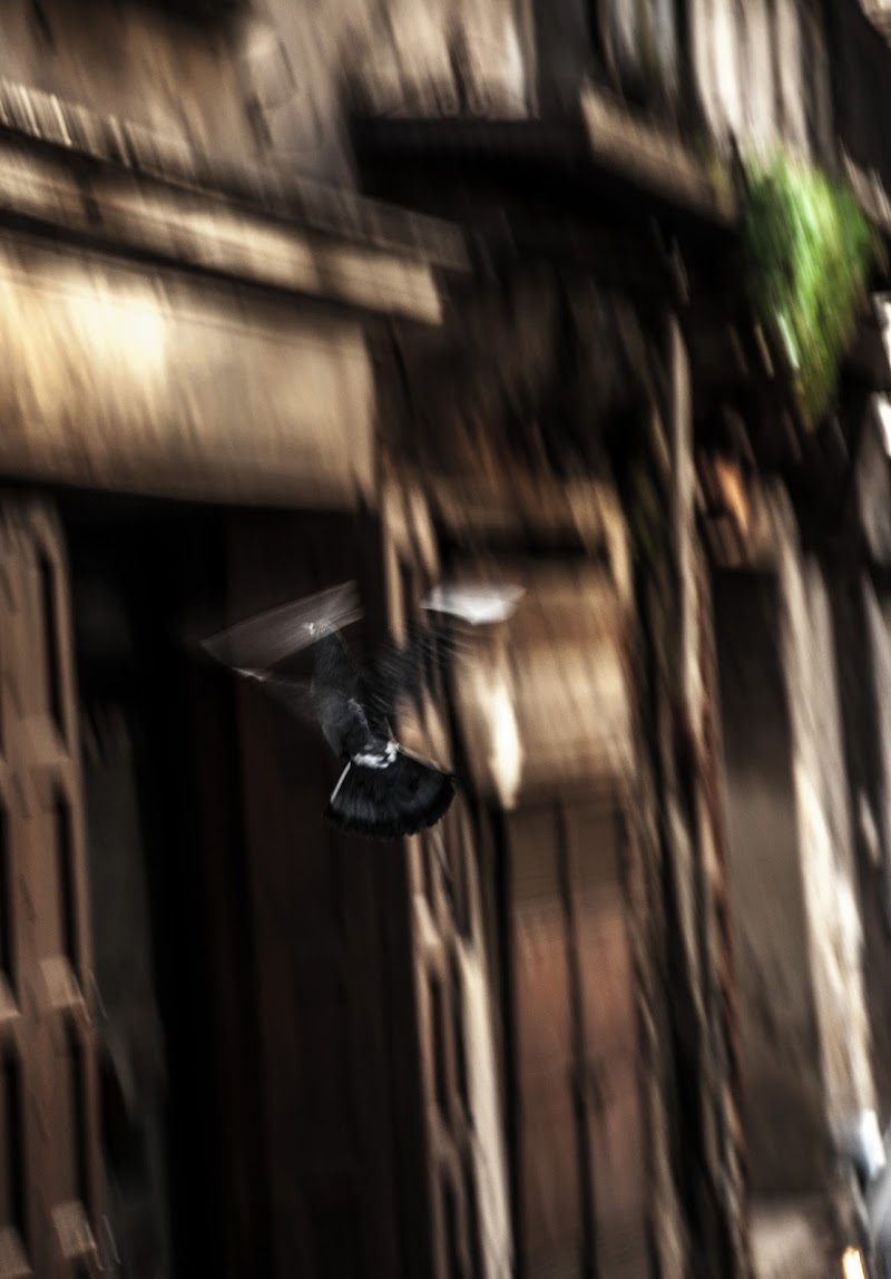 il volo di piki pikitorija photo