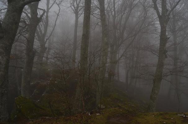Into the fog di MartaSG
