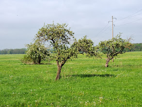 Photo: three and a power line  #powerlinefriday // +Powerline Fridayby +Natosha Davis #fotoamateur // +Fotoamateur #trees  #MeVoPo  #Müritz