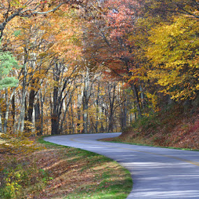 by Lisa Raith - Landscapes Forests ( forests, autumn, foliage )