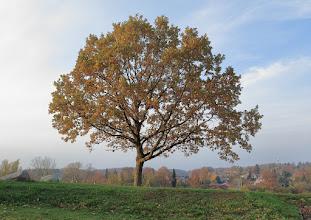 """Photo: 3. plads november 2018, foto: Jens Ole Pedersen. Tema: """"Et træ""""."""