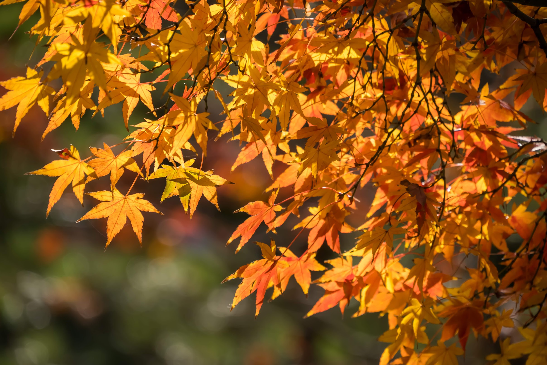 福岡 大濠公園 日本庭園 紅葉2