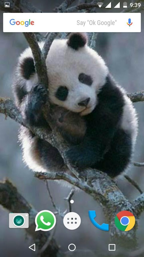 cute panda wallpapers hd android apps on google play