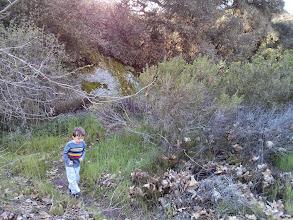 Photo: Finn Explores a Trail