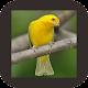 Download Kicau Burung Kenari Super For PC Windows and Mac