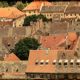 Petrovaradin by Гојко Галић - Buildings & Architecture Other Exteriors
