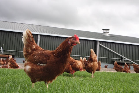 Arddleen application for chicken farm