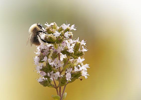 l'origine del miele di artu