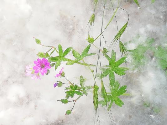 Nel polline di Inazur