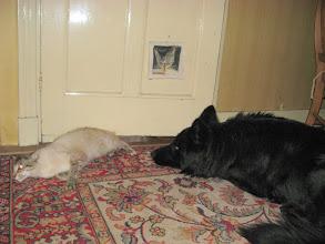 Photo: Dan blijven we toch samen bij de deur wachten, alert en op ons hoede