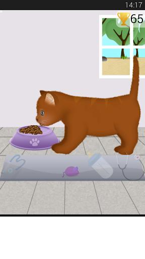 猫妊娠手术2