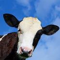 Crazy Cow FREE icon