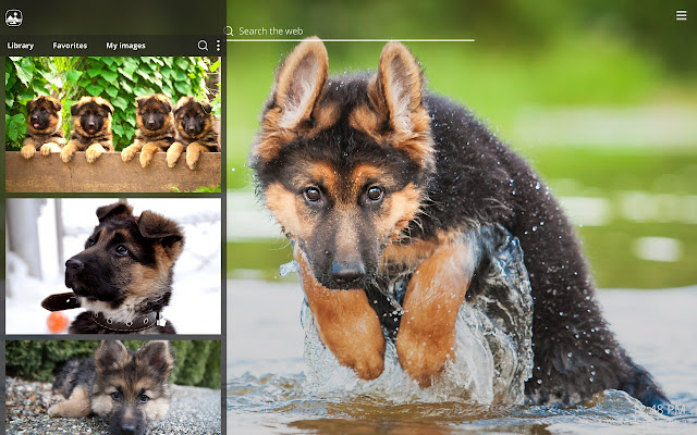 My German Shepherd HD Dog Wallpapers Theme