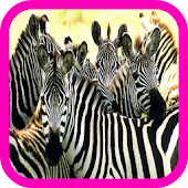 Zebra live wallpaper