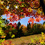 FALL COLORS by Marc-Andre Grenier - Landscapes Mountains & Hills ( mountain, fall colors, leaves, sunshine, trees )