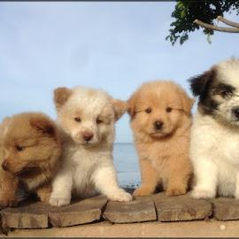 Shiamwa's Vito Pack by Dickson   Shia - Animals - Dogs Portraits ( pets, pup, portrait, dog )
