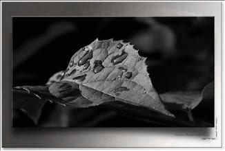 Foto: 2012 01 30 - R 11 09 09 024 - P 154 - gutes Blatt